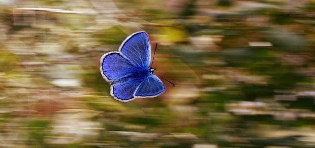 Le papillon qui refusait de quitter son cocon